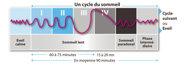 cycle-du-sommeil